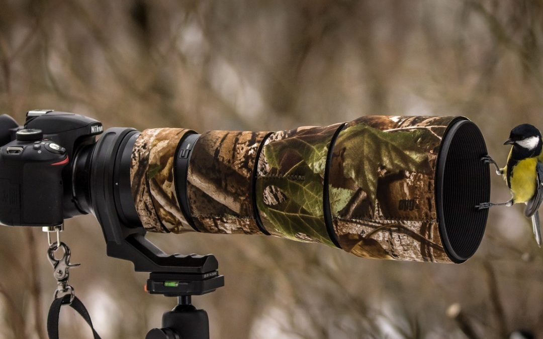 Nikon Equipment for Wildlife and Nature Photography